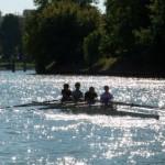 Aviron sur la Marne